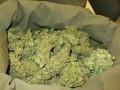 В Мексике изьяли 19 тонн марихуаны