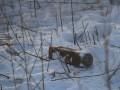 Около Светлодарска саперы нашли российскую кассетную мину