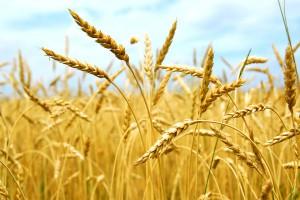 Инвентаризация украинских сельхозземель затягивается: Названа причина