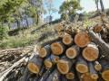 В районе Пейзажной аллеи в Киеве незаконно вырубили 160 деревьев
