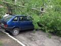 В Киеве дерево рухнуло на припаркованные автомобили