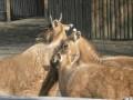 Животные киевского зоопарка вышли на весеннюю прогулку