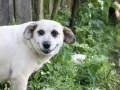 Собака-улыбака и долгожительница Бреста: животные недели (ФОТО)