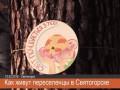 Переселенцы в Святогорске – Путину и боевикам: