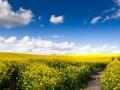 Под Одессой погибли миллионы пчел: Ядом