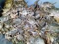В Херсонской области задержали браконьеров с уловом крабов на 89 млн грн