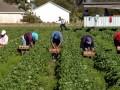 Итоги 28 апреля: Запрет на выезд заробитчанам и закон о рынке земли