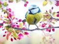 Погода в Украине на 3 марта: Солнечно, на Западе возможны дожди