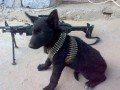 Животные недели: пес