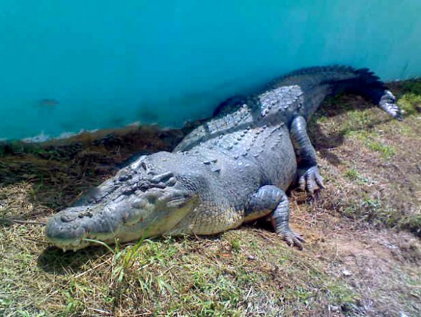 Интересный факт дня: Древние крокодилы сражались с гигантскими змеями