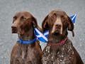 Животные недели: купание питона и собаки на референдуме в Шотландии (фото)