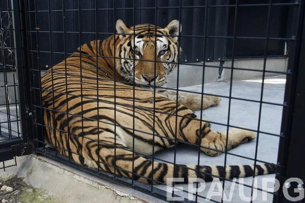 Минкультуры хочет запретить использование животных в цирке