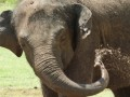 В Голландии разлучат устроивших бунт в зоопарке слонов