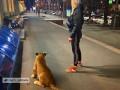 В центре Харькова девушка выгуливала льва на поводке