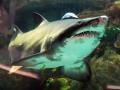 В Германии умерла акула из киевского ТРЦ Ocean Plaza