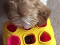 Умный пес покорил своим умением решать задачи