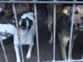 В Украине принялись убивать бездомных животных из-за угрозы чумы