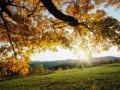 Бабье лето придет в Украину 8 октября и будет прохладным