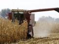 Из-за засухи юг Украины потерял половину урожая