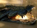В Австралии на борту самолета обнаружили крокодила