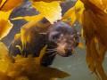 Подводный мир: красивые ФОТО морских животных на грани исчезновения