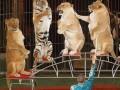 В Черновцах запретили передвижные цирки с животными