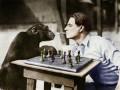В США пранкер накурил обезьяну и прослыл живодером