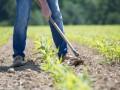 Бег на месте: Почему банки не кредитуют аграриев