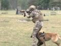 Во Львовской области подготовили собак-штурмовиков для спецназа