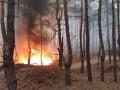 В Украине увеличили штрафы за нанесение вреда природе