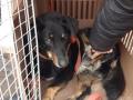В Ирпене коммунальщики похитили собаку на глазах у хозяина