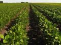 Украинский клуб агробизнеса назвал площадь земель, что обрабатываются незаконно