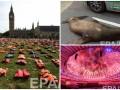 День в фото: спасательные жилеты в Лондоне, морской лев в Германии и закрытие Паралимпиады в Рио