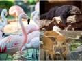 Животные недели: спящий бинтуронг, стая фламинго и задумчивый кабанчик
