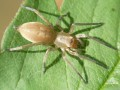 Юг Украины атакуют ядовитые пауки