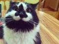 Кошка-улыбака заткнула за пояс Сердитого кота (ФОТО)