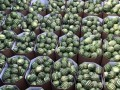 Украина начинает сезон экспорта арбузов: Херсонские стоят 5-7 грн/кг