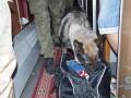 В Луганской области нашли 27 гранат на ж/д станции