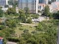 В Одессе неизвестные спилили десятки деревьев