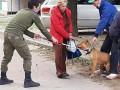 В Днепре бойцовский пес сорвался с поводка и покусал людей