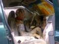 Водителя и его собаку с ног до головы облило краской