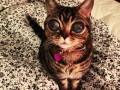 Кошка-инопланетянин стала звездой сети