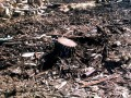 Возле рынка Теремки в Киеве незаконно срубили более 50 дубов