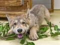 Животные недели: Охранник блокпоста в зоне АТО и умилительный волчонок