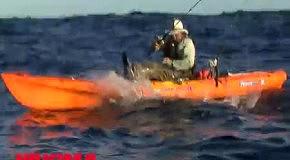 Акула вырывает рыбу из рук: самые пугающие видео с акулами