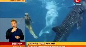 На Филиппинах устроили модную фотосессию с китовыми акулами