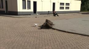 Встречу членов НАТО в Брюсселе будет охранять орел