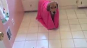 Собака сама моется в ванной