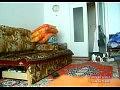 Кот и кролик играют в догонялки (видео) .