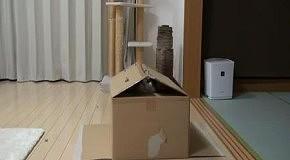 Мару не может залезть в коробку